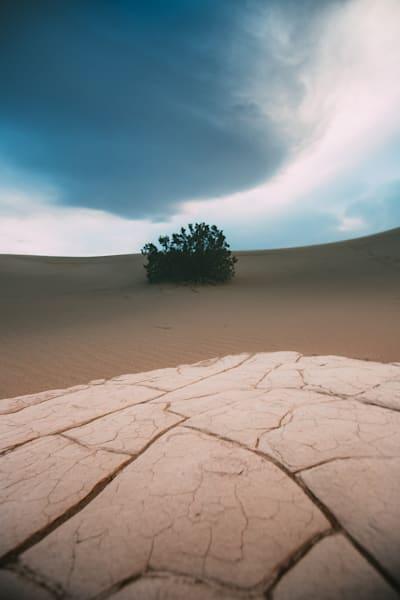 desert bush.
