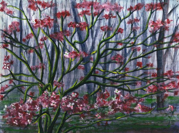 Dogwoods: Spring Glory