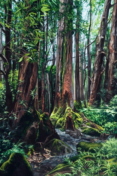 Rainforest tropical art print | Kevin Grass Fine Art