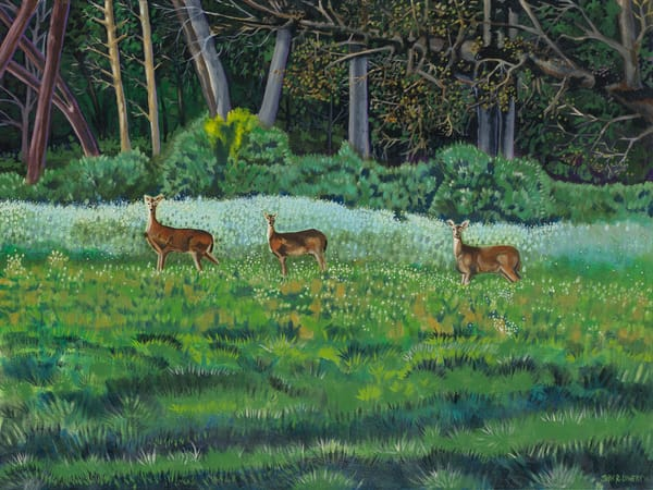 Deer paintings by John R. Lowery available as art prints