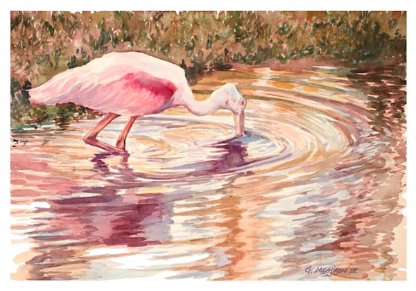 Roseate Spoonbill | Watercolor Landscapes | Gordon Meggison IV