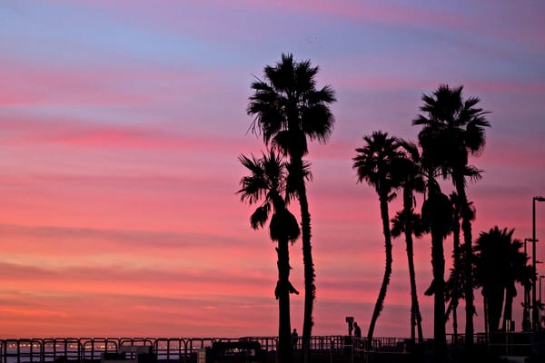 'Palm Tree Sunset' Photograph for sale as Fine Art
