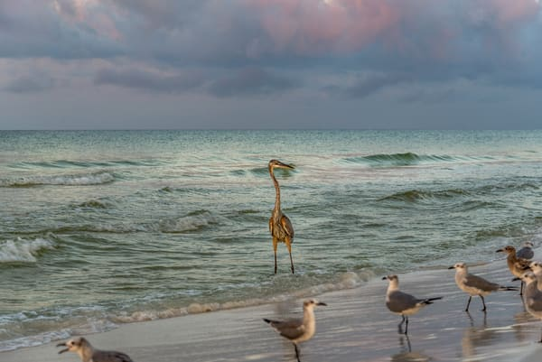 Waiting, a beautiful Florida beach photograph | Susan J Photography