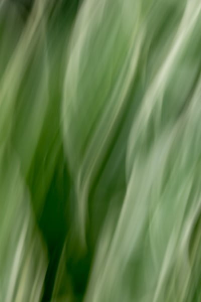 Natural Motion # 14 - Abstract Art Photographs for sale great for interior design. Ron Pickering Photography