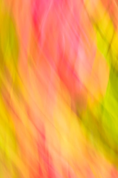 Natural Motion # 24 - Abstract Art Photographs for sale by Ron Pickering