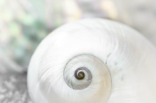 Pearl Lite