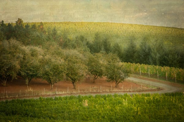 Filberts and Wine fine art photograph