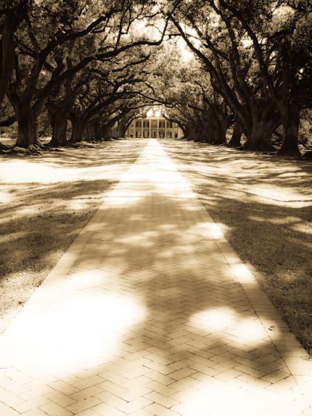 Live Oak Walk