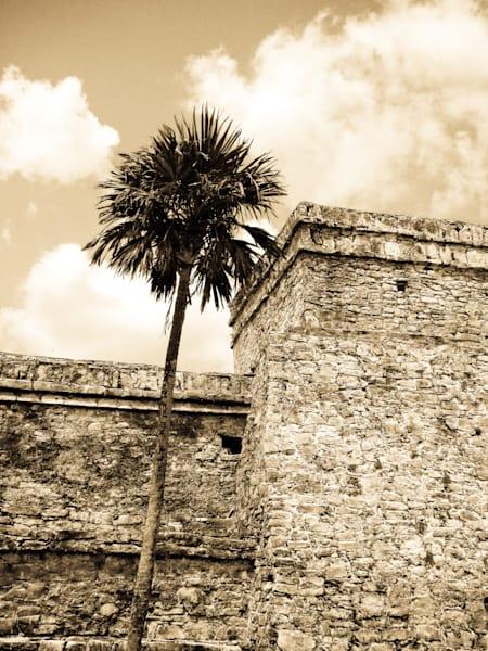 Mayan Palm