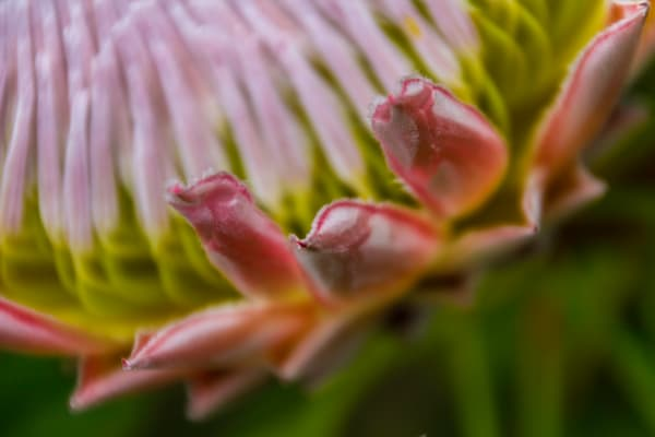 Nature Photographs for Sale as Fine Art