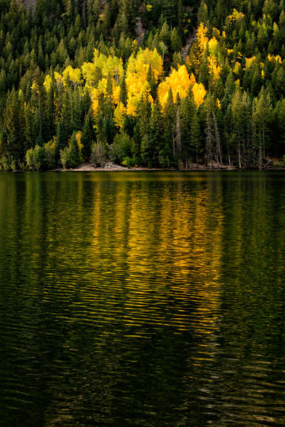 Yellow aspens reflecting into Cottonwood Lake, Buena Vista, Colorado.