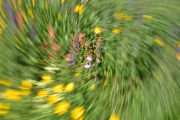 Impressionistic Photographs - Motion Blur Mountain Wildflowers Vortex - Fine Art Prints on Metal, Canvas, Paper & More By Kevin Odette Photography