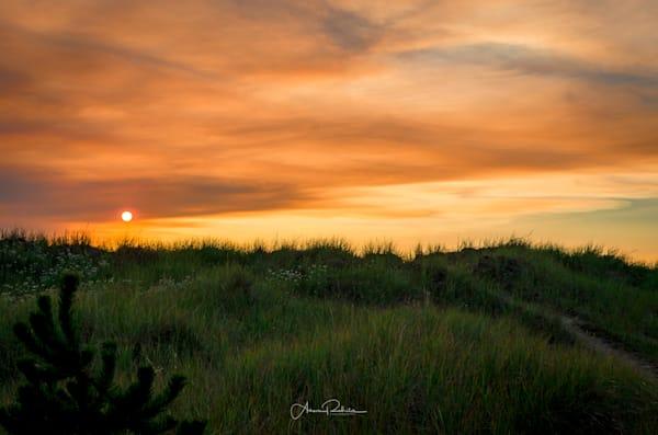 Beach grass sunset