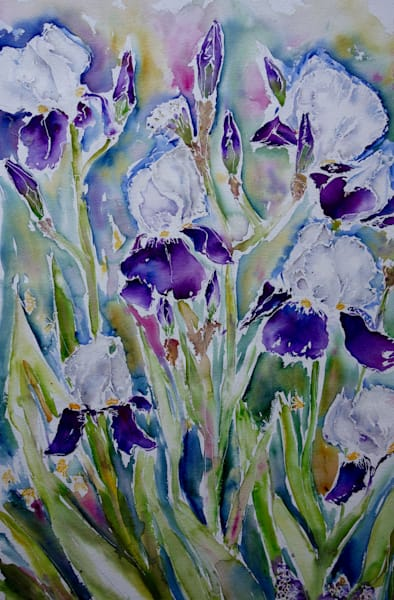 Field of Irises