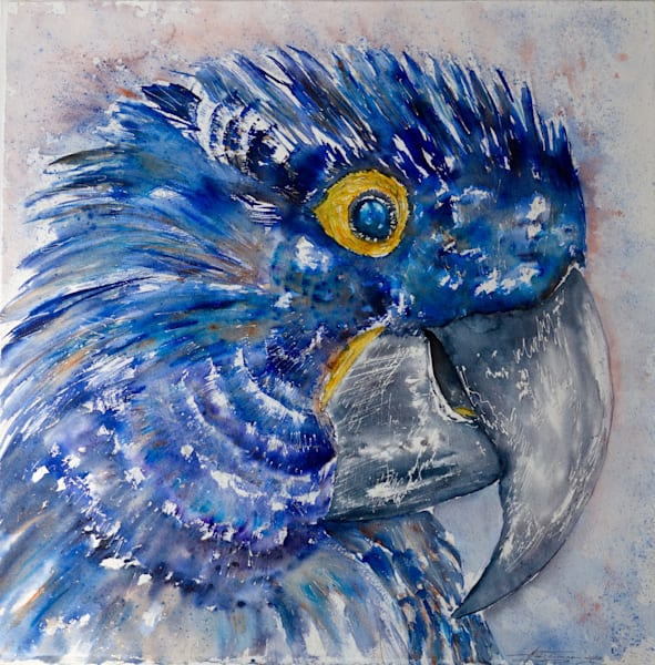 Antoine the Hyacinth Macaw