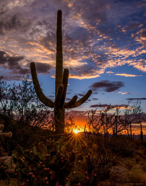 USA, Arizona, Tucson, Saguaro National Park, Tucson Mountain District