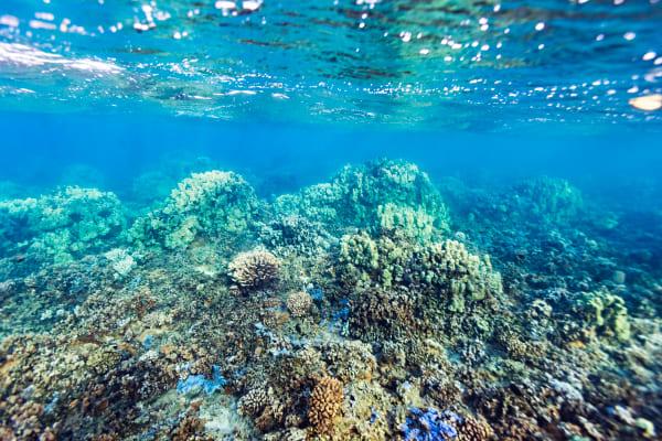 Molokai's Barrier Reef Photograph For Sale As Fine Art
