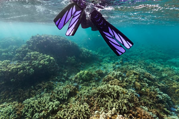 Snorkeler In Molokai's Barrier Reef Photograph For Sale As Fine Art