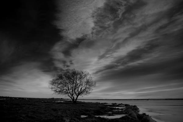 Evening Tree in Black & White
