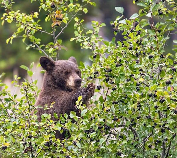 Bear Paw  Photography Art | Swan Valley Photo