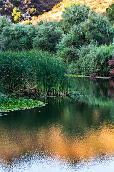 Soft Reflection At Century Lake Photograph For Sale As Fine Art