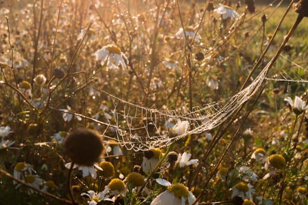 Romantic nature fine art photographs for sale | Sage & Balm Photography