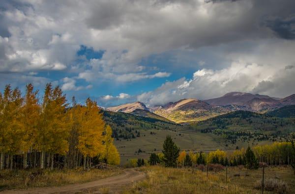 Colorado Pike National Forest Landscape Photo Golden Aspen Trees
