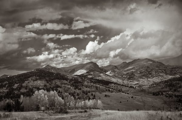 Black & White Landscape Photo Autumn in Colorado's Pike National Forest