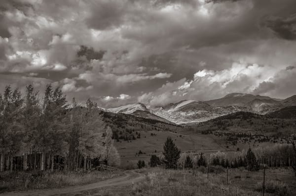 Black & White Landscape Photo of Colorado's Pike National Forest  in Autumn