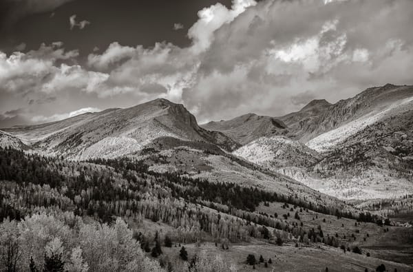 B&W Photo Colorado Pike National Forest, White Clouds, Blue Skies & Aspen Trees