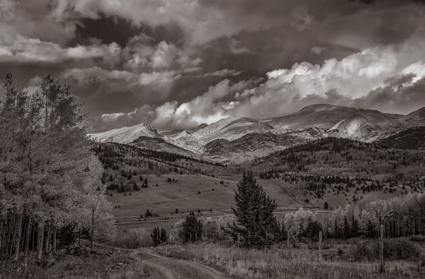 Colorado Pike National Forest Black & White Photograph taken in Autumn