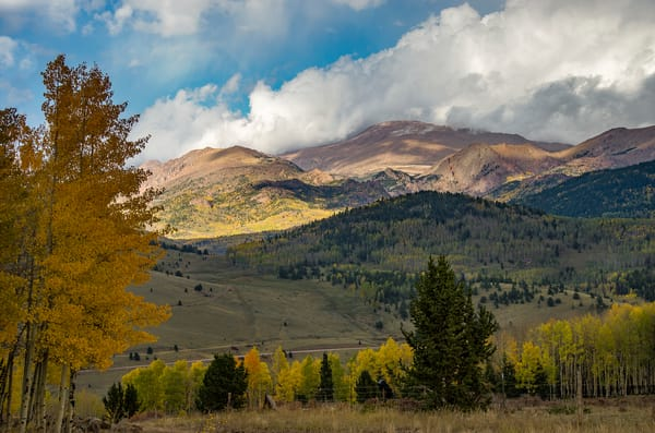Fall Colors Colorado's Pike National Forest Golden Yellow Aspens