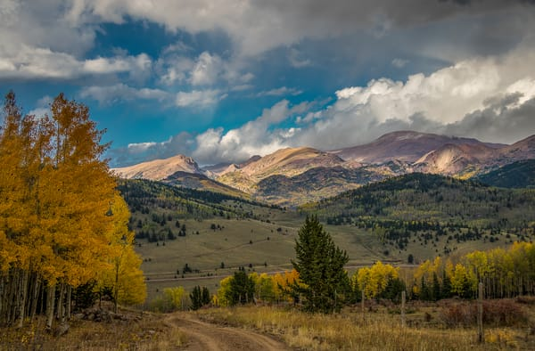 Photograph of Fall Colors Colorado's Pike National Forest Aspen Trees