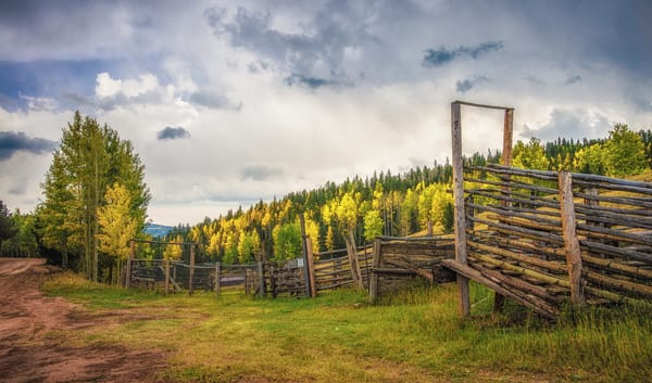 Photo of Colorado Ranch Aspen Trees on Gold Camp Road Pike National Forest