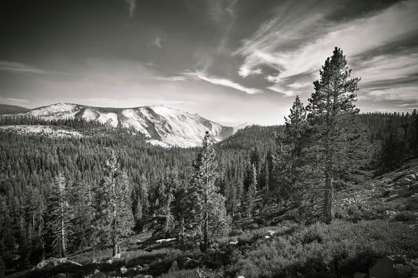 Pine Progression