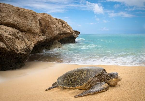 turtle full print