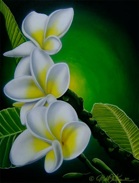 Mark Faulkner | Plumeria Morning Bloom