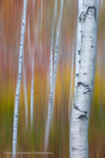 Impressionist fine art nature-inspired abstract vertical print/decorate your space with the perfect blend of color and texture by Tom Schoeller