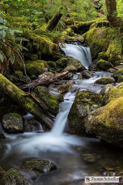 Delicate waterfalls of the Olympic Peninsula rainforest fine art landscape prints/Falls Creek by Tom Schoeller