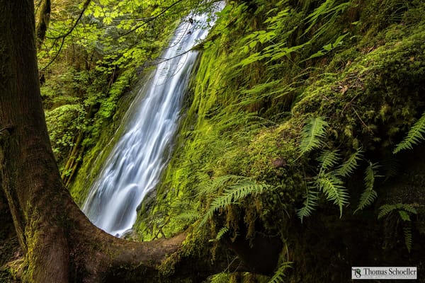 Madison Falls Olympic National Park fine art prints/lush rainforest forest and wild waterfalls