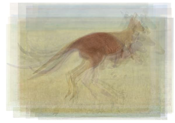Overlay art – contemporary fine art prints of a hopping kangaroo