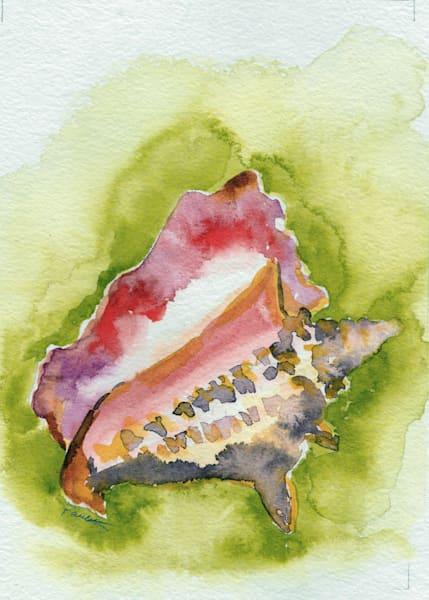 Queen Conch Portrait
