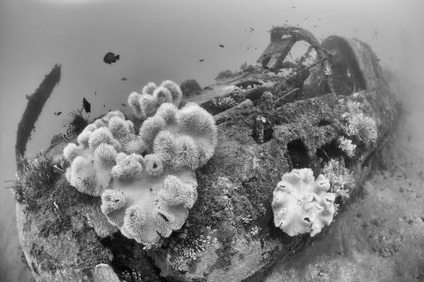 Douglas Bomber Plane Wreck, Solomon Islands