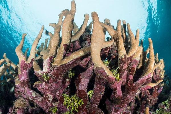 Shallow Coral Garden Formations, Solomon Islands