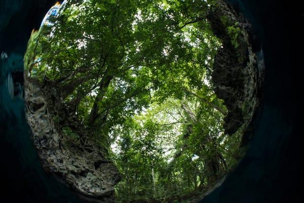 Circular Trees Overhead, Solomon Islands