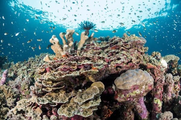 Shallow Coral Garden & Reef Fish, Solomon Islands