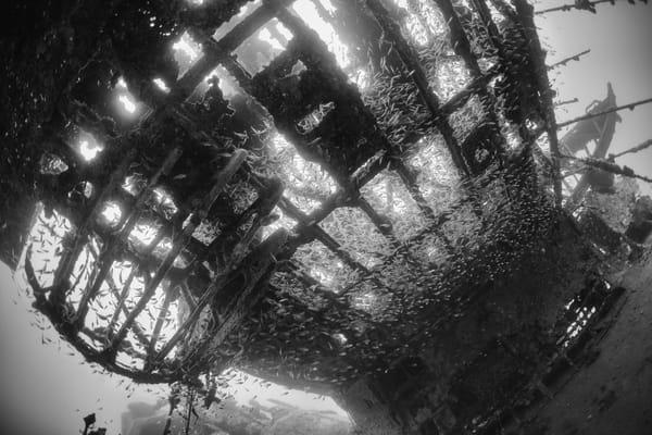 Catalina Plane Wreck Underwing & Glassfish, Solomon Islands
