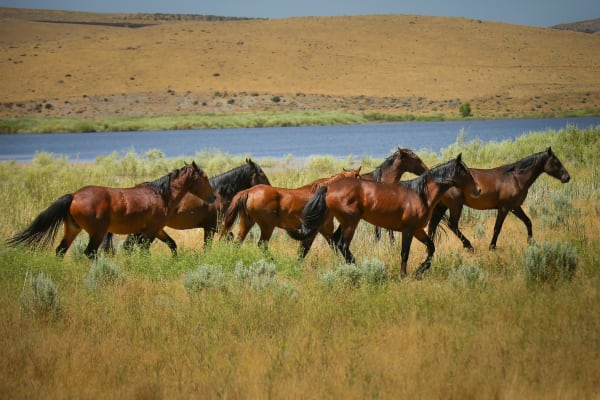 Wild Horses of the Southwest- photographic art by Mason and Mason Images