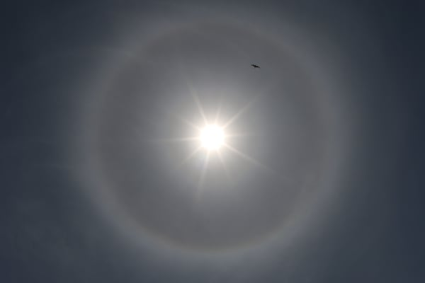 Unusual picture of the sun with a halo around it with a bird by Steven Archdeacon.