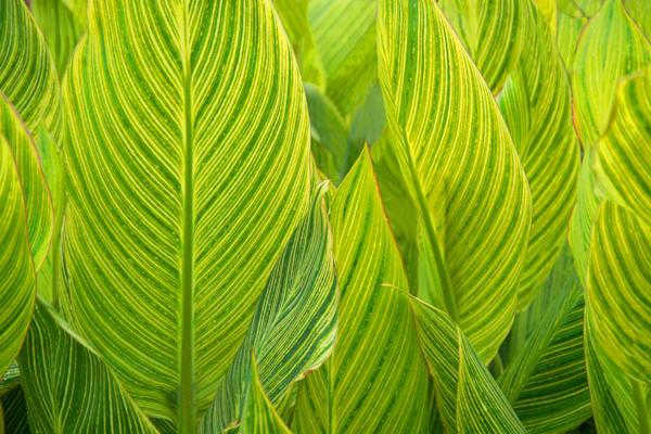 """""""Shades of Green"""""""